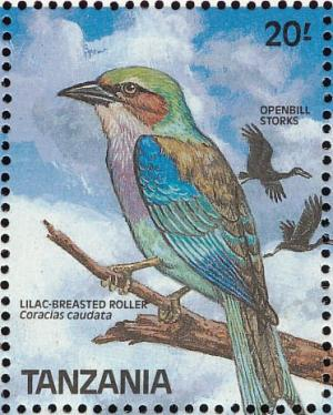 Colnect-1745-634-Lilac-breasted-Roller-Coracias-caudatus.jpg