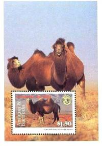 Colnect-4112-699-Bactrian-Camel-Camelus-ferus-bactrianus.jpg