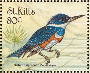 Colnect-1659-364-Belted-Kingfisher.jpg