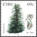 Colnect-1955-121-Yew-taxus-baccata.jpg