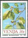Colnect-2840-102-Food-of-the-Veld-Berchemia-discolor.jpg