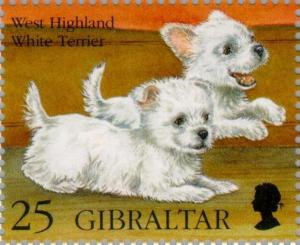 Colnect-120-793-West-Highland-White-Terrier-Canis-lupus-familiaris.jpg