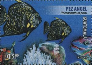 Colnect-3164-836-French-angelfish-Pomacanthus-paru.jpg