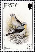 Colnect-6126-327-Northern-Wheatear-Oenanthe-oenanthe.jpg