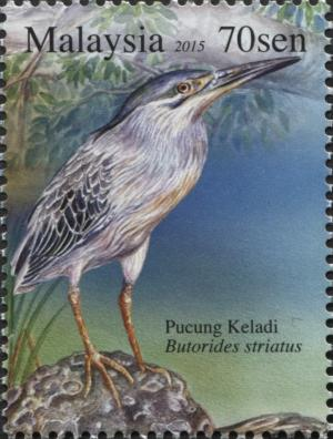 Colnect-2857-078-Striated-Heron-Butorides-striatus.jpg