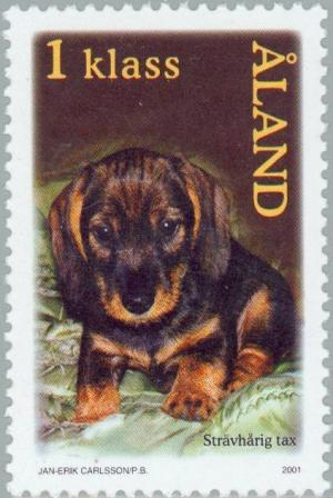 Colnect-160-918-Wire-haired-Dachshund-Canis-lupus-familiaris.jpg