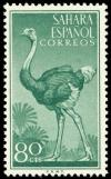 Colnect-1399-271-Ostrich-Struthio-camelus.jpg