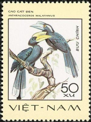 Colnect-3682-055-Black-Hornbill-Anthracoceros-malayanus.jpg