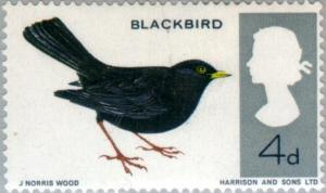 Colnect-121-672-Common-Blackbird-Turdus-merula---Phosphor.jpg