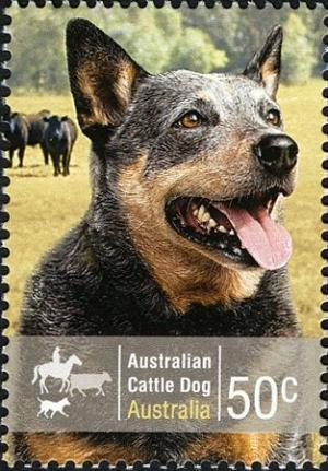 Colnect-472-685-Australian-Cattle-Dog-Canis-lupus-familiaris.jpg