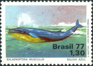 Colnect-4797-621-Blue-Whale-Balaenoptera-musculus.jpg