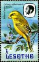 Colnect-1725-254-Yellow-Canary-Serinus-flaviventris.jpg