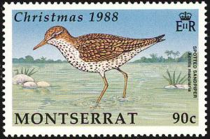 Colnect-1785-039-Spotted-Sandpiper-Actitis-macularius.jpg