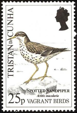 Colnect-2606-249-Spotted-Sandpiper-Actitis-macularia.jpg