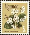 Colnect-4257-199-East-African-cordia-Cordia-abyssinica.jpg