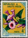 Colnect-507-619-Ipomoea-stolonifera.jpg