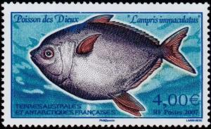 Colnect-888-800-Southern-Moonfish-Lampris-immaculatus.jpg