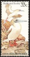 Colnect-1505-885-Red-footed-Booby-Sula-sula.jpg