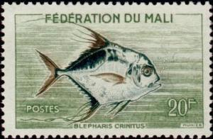 Colnect-1049-706-African-Pompano-Alectis-crinitus.jpg