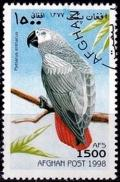 Colnect-2215-274-Gray-Parrot-Psittacus-erithacus.jpg