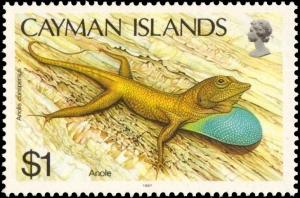 Colnect-5132-655-Cayman-Blue-throated-Anole-Anolis-conspersus.jpg