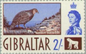 Colnect-120-022-Barbary-Partridge-Alectoris-barbara.jpg