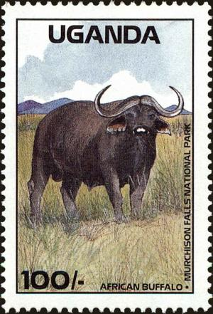 Colnect-4277-814-African-Buffalo-Syncerus-caffer-Murchison-Falls-National-.jpg