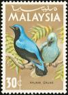 Colnect-2359-646-Asian-Fairy-bluebird-Irena-puella.jpg