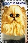 Colnect-4686-097-Copper-eyed-white-Persian.jpg