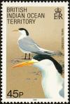 Colnect-1553-522-Greater-Crested-Tern-Thalasseus-bergii.jpg
