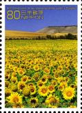 Colnect-3049-176-Sunflower-field.jpg