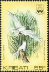 Colnect-1095-844-Pacific-White-Tern-Gygis-alba-candida-.jpg