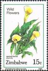 Colnect-4597-691-Spotted-Leaved-Arum-Lily.jpg