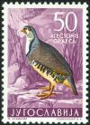 Colnect-5663-488-Rock-Partridge-Alectoris-graeca.jpg