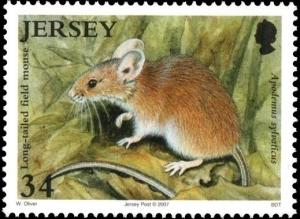 Colnect-4400-298-Wood-Mouse-Apodemus-sylvaticus.jpg