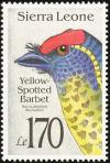 Colnect-1617-955-Yellow-spotted-Barbet-Buccanodon-duchaillui.jpg