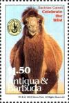 Colnect-4112-684-Bactrian-camel.jpg