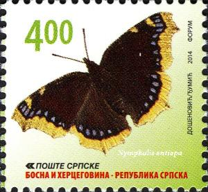 Colnect-4552-295-Mourning-Cloak-Nymphalis-antiopa.jpg