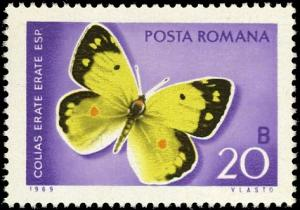 Colnect-5055-327-Eastern-Pale-Clouded-Yellow-Colias-erate.jpg
