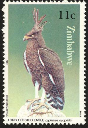 Colnect-1476-702-Long-crested-Eagle-Lophaetus-occipitalis.jpg