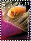 Colnect-4910-089-Pink-anemone-fish-Amphiprion-perideraion.jpg