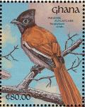 Colnect-1459-774-African-Paradise-Flycatcher-Terpsiphone-viridis.jpg