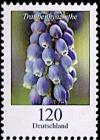Colnect-6195-683-Grape-Hyacinth.jpg