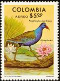 Colnect-2504-976-Purple-Gallinule-Porphyrula-martinica-Water-Lily.jpg