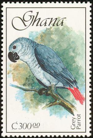 Colnect-1459-766-African-Grey-Parrot-Psittacus-erithacus.jpg