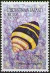 Colnect-3885-573-Bumblebee-Snail-Engina-mendicaria.jpg